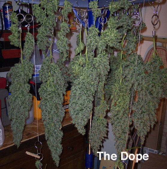 The Dope